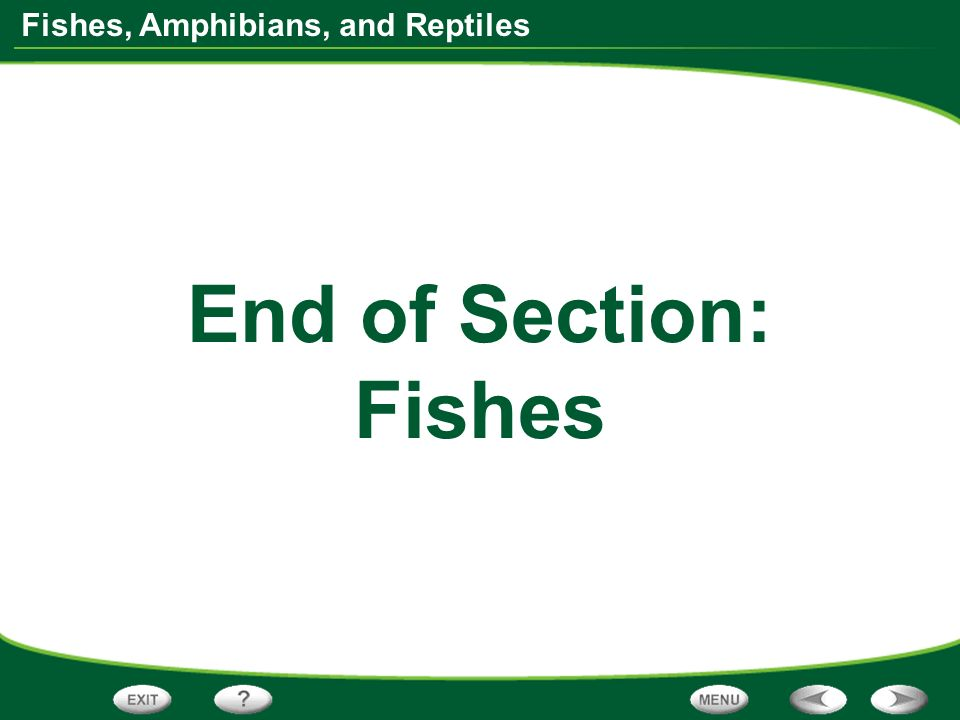 End of Section: Fishes