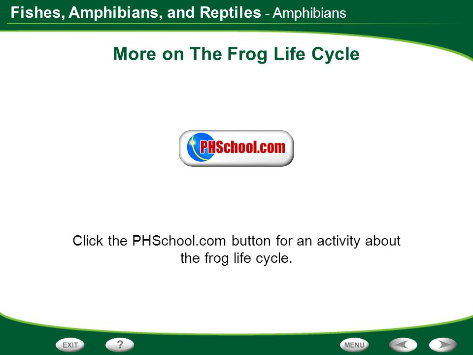 More on The Frog Life Cycle