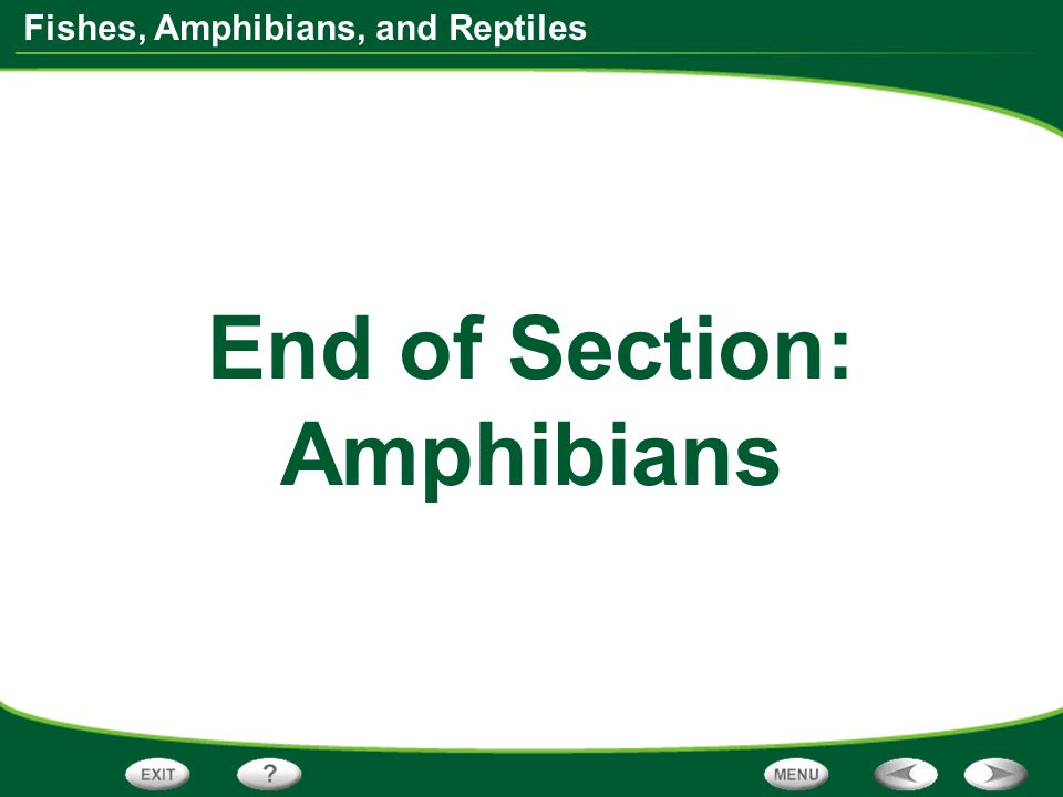 End of Section: Amphibians