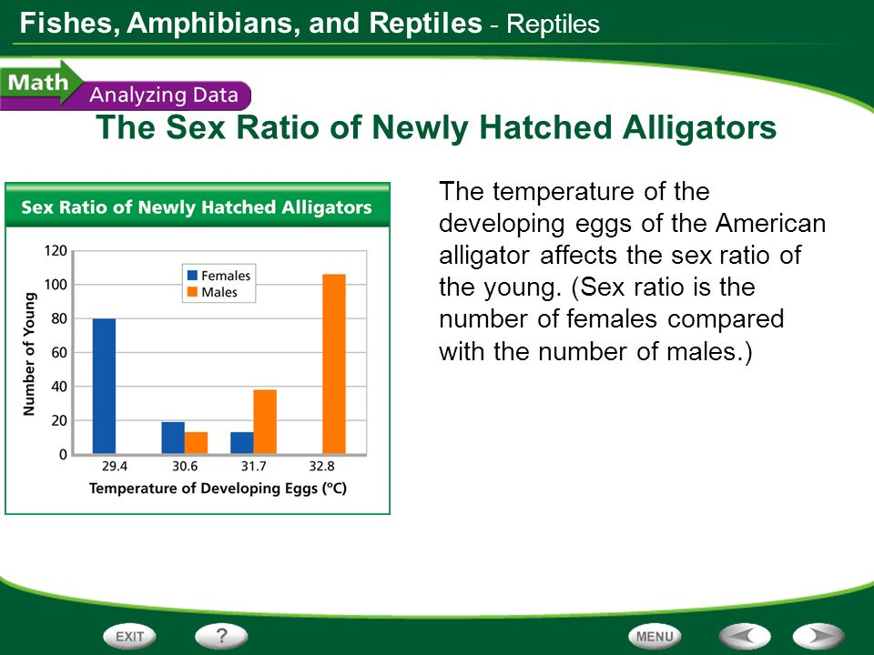 The Sex Ratio of Newly Hatched Alligators