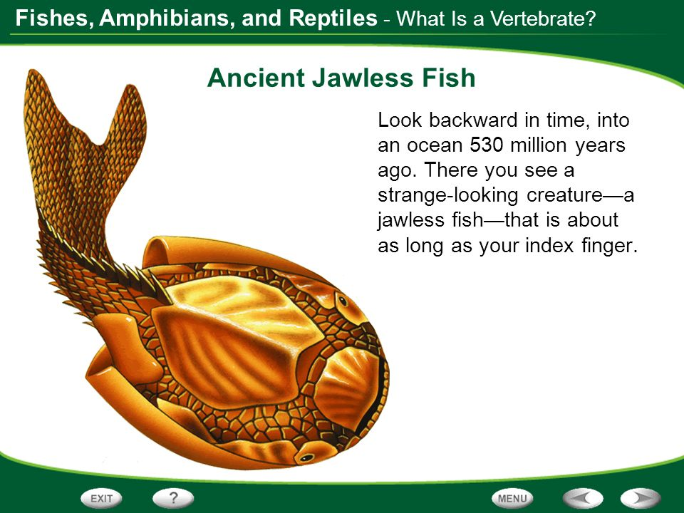 Ancient Jawless Fish - What Is a Vertebrate
