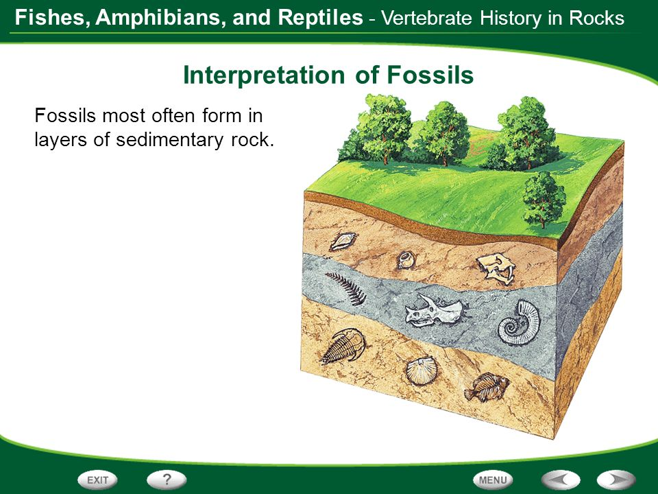 Interpretation of Fossils