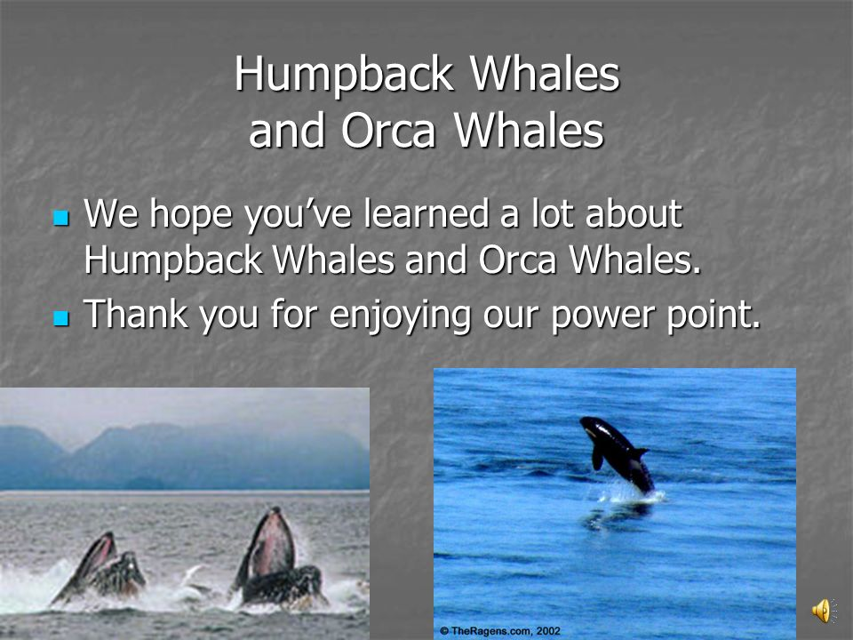 Humpback Whales and Orca Whales