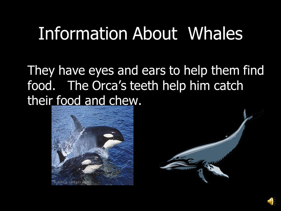 Information About Whales