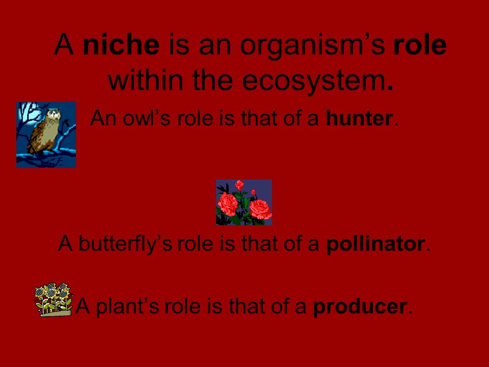 A niche is an organism's role within the ecosystem.