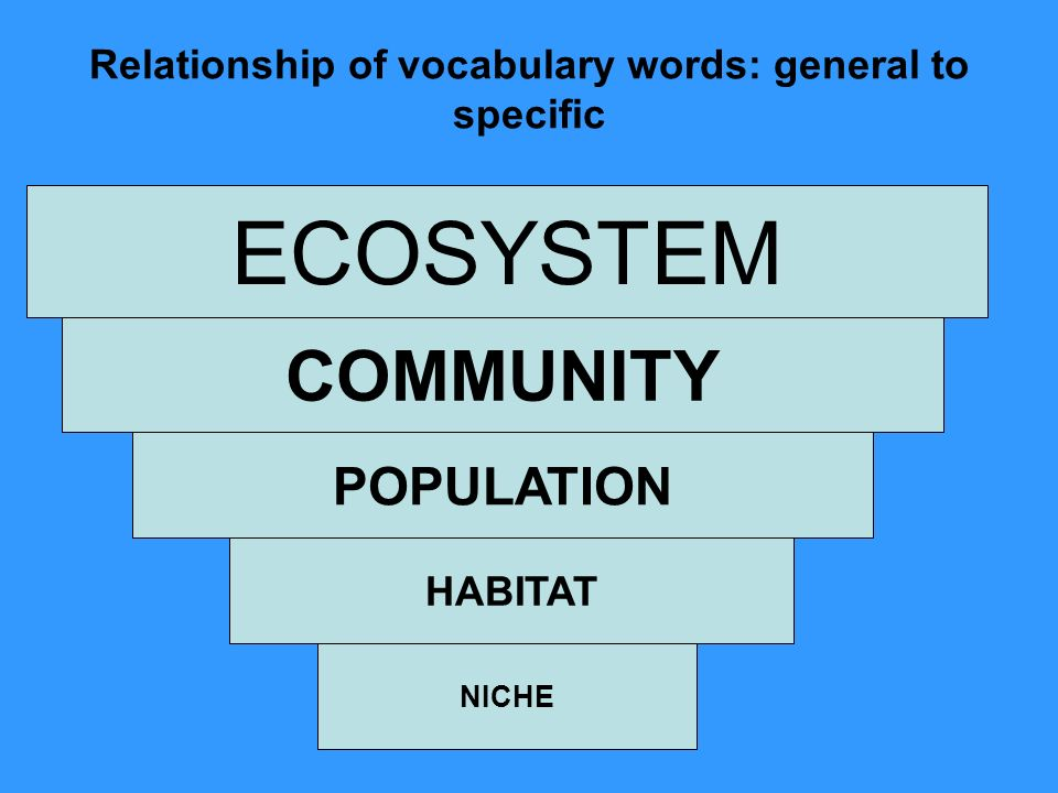 Relationship of vocabulary words: general to specific