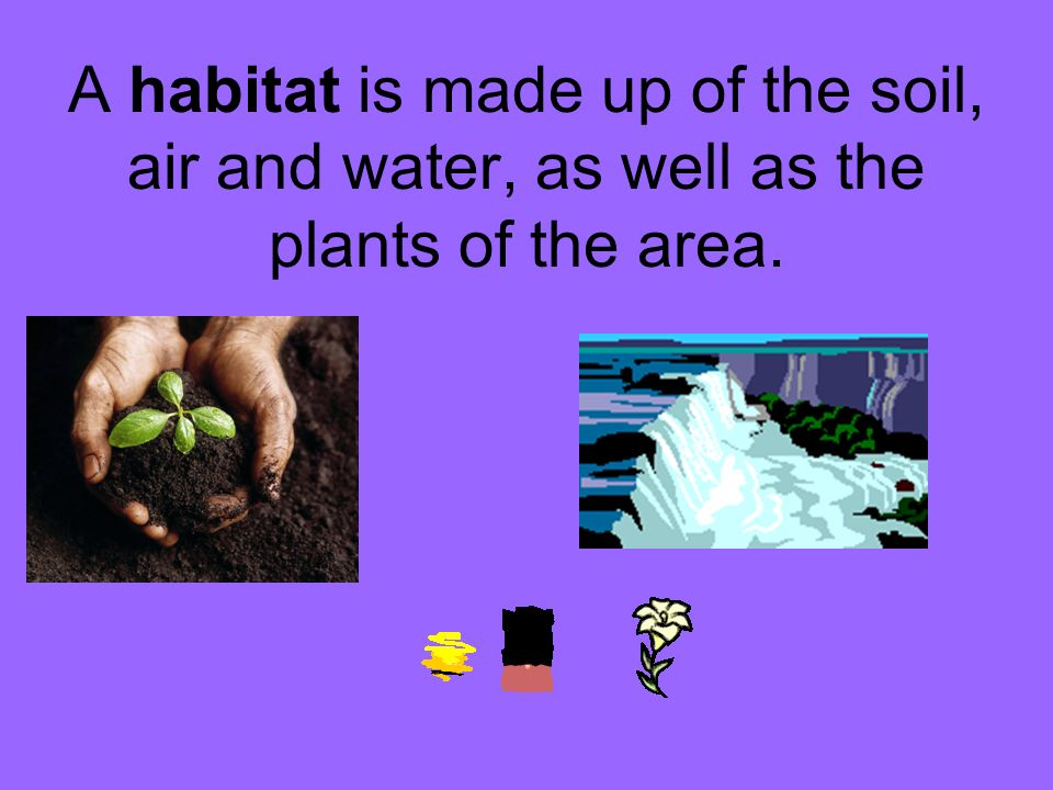 A habitat is made up of the soil, air and water, as well as the plants of the area.