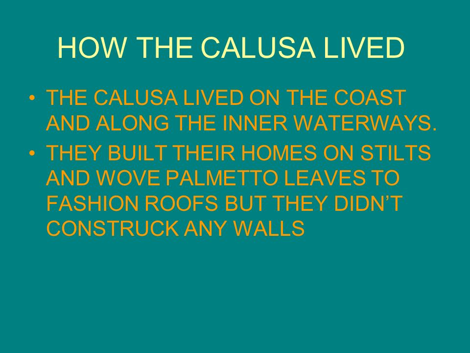 HOW THE CALUSA LIVED THE CALUSA LIVED ON THE COAST AND ALONG THE INNER WATERWAYS.