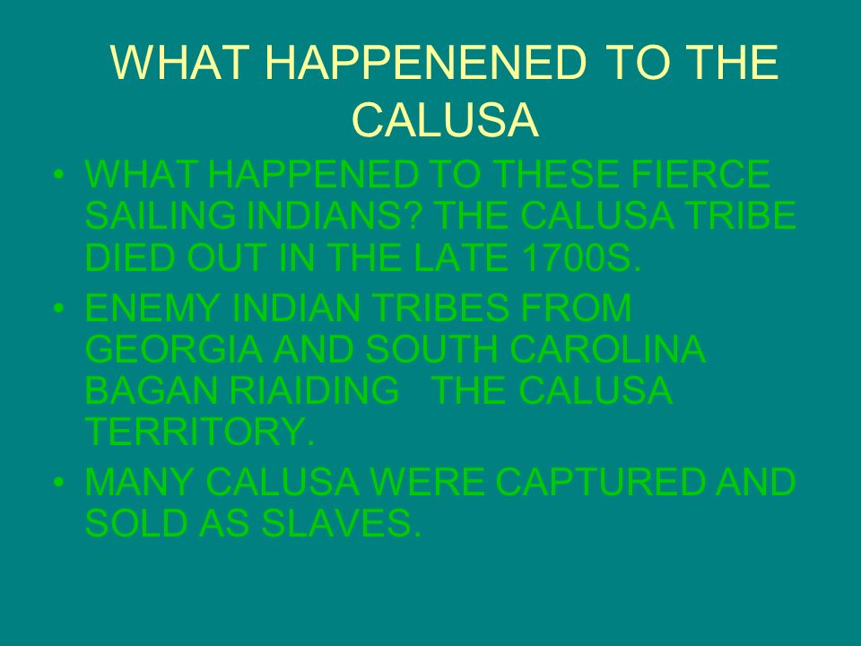 WHAT HAPPENENED TO THE CALUSA
