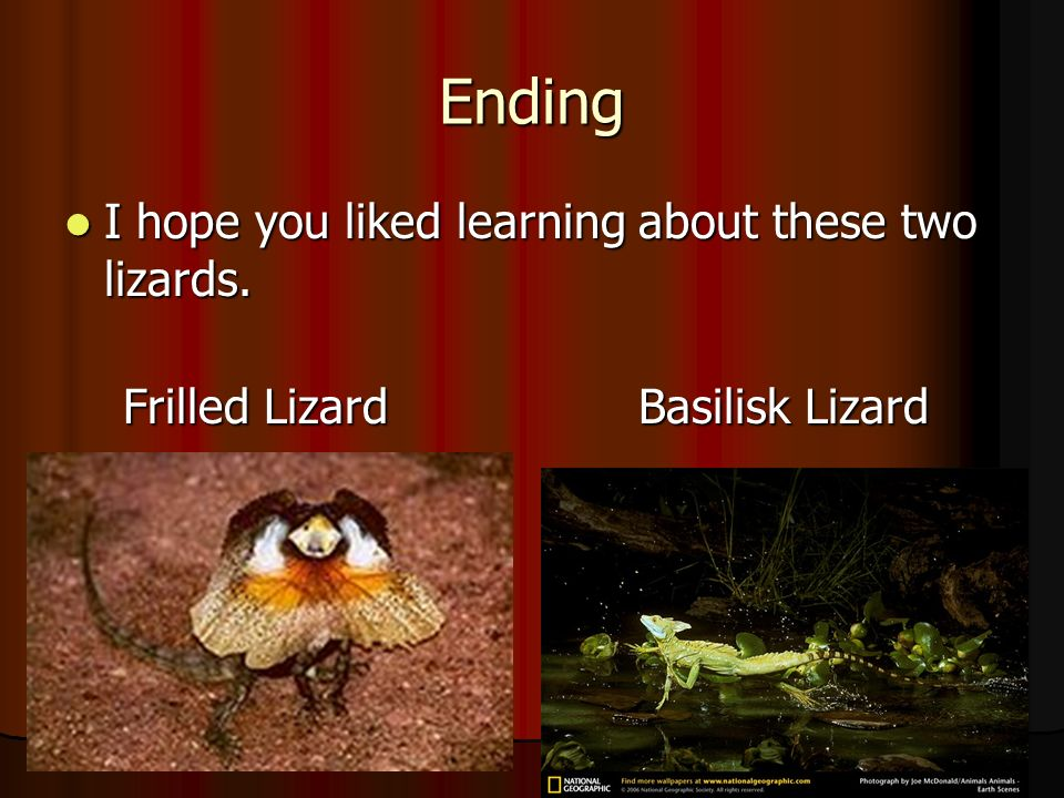 Ending I hope you liked learning about these two lizards.
