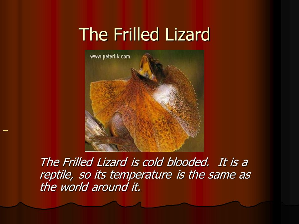 The Frilled Lizard General.