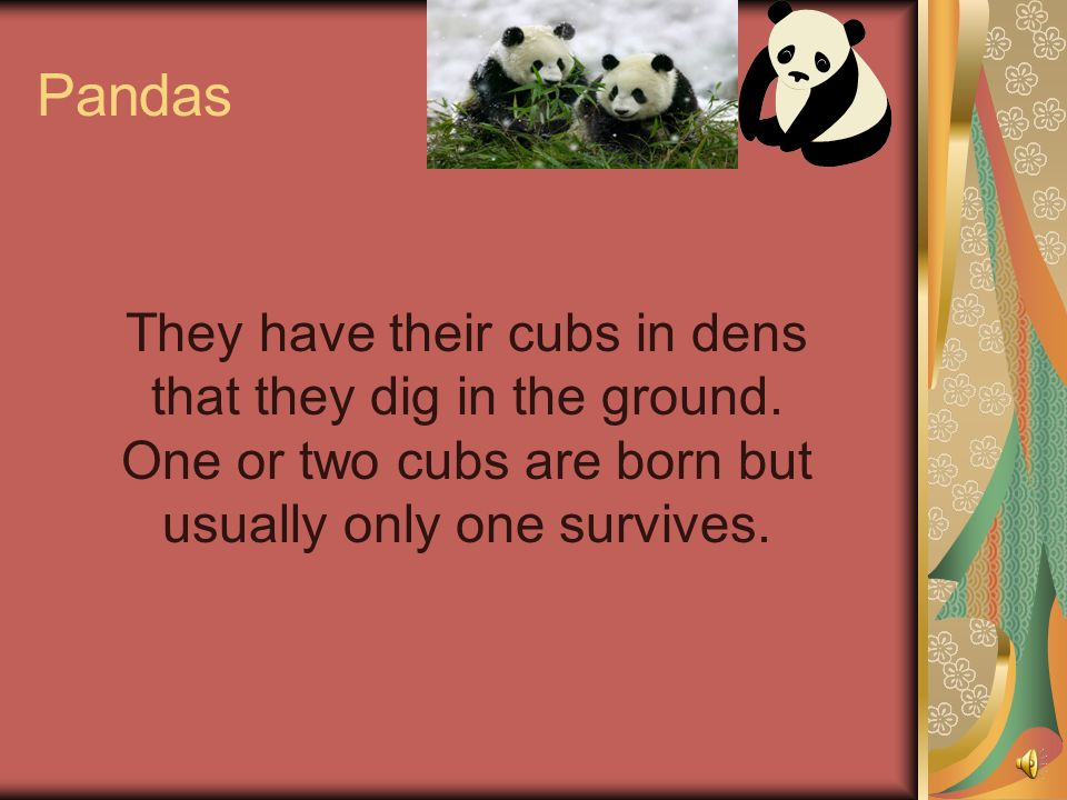 Pandas They have their cubs in dens that they dig in the ground.