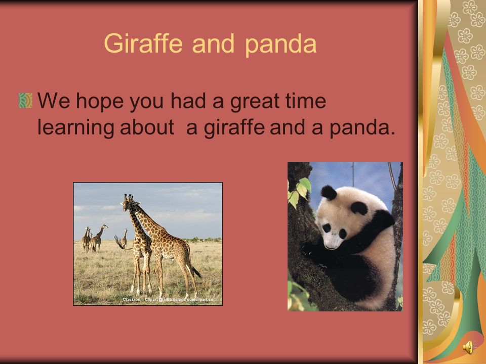 Giraffe and panda We hope you had a great time learning about a giraffe and a panda.