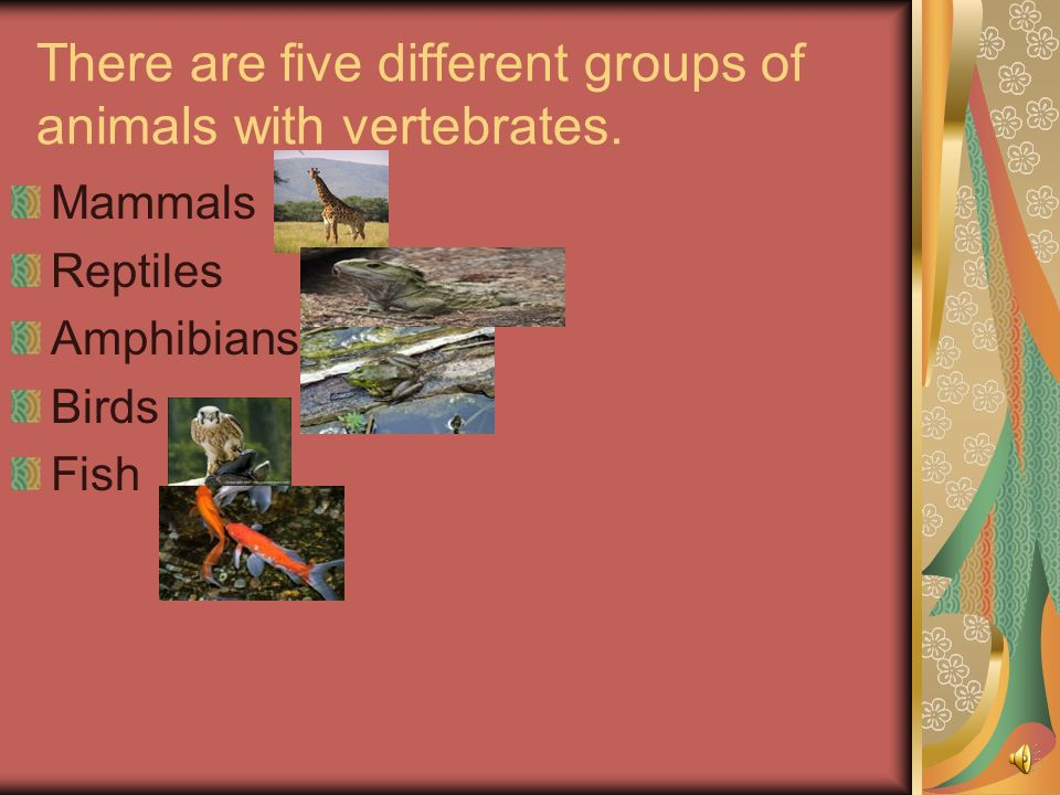 There are five different groups of animals with vertebrates.