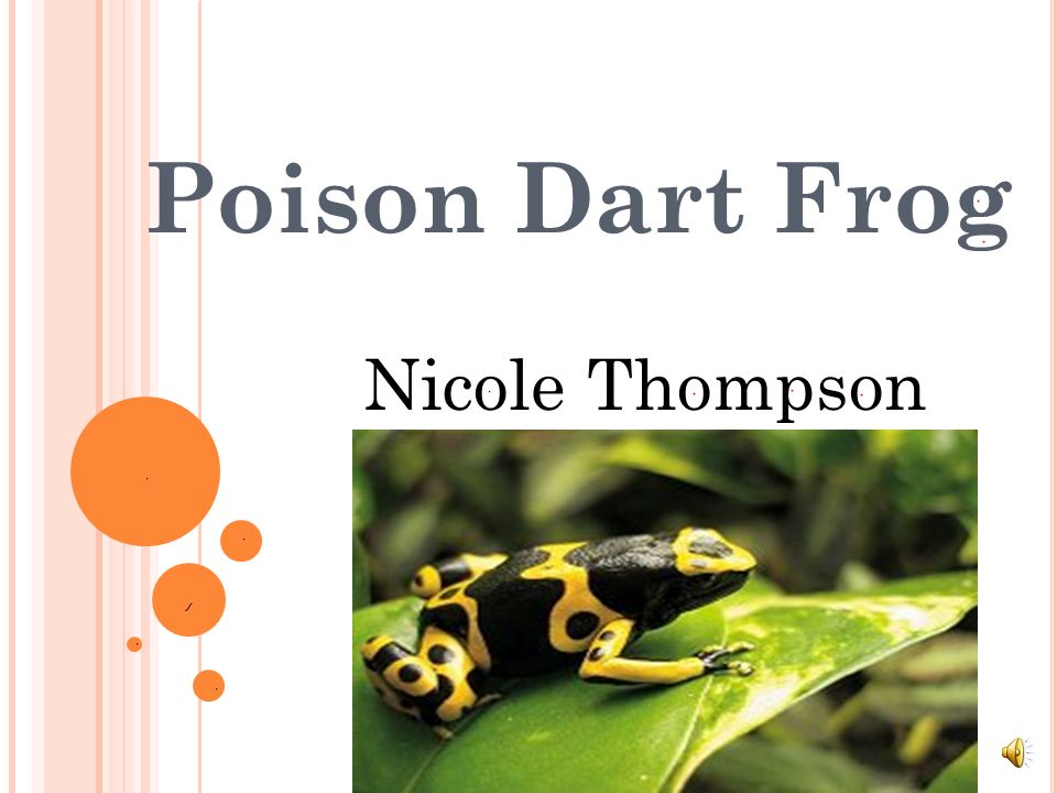 Poison Dart Frog Nicole Thompson