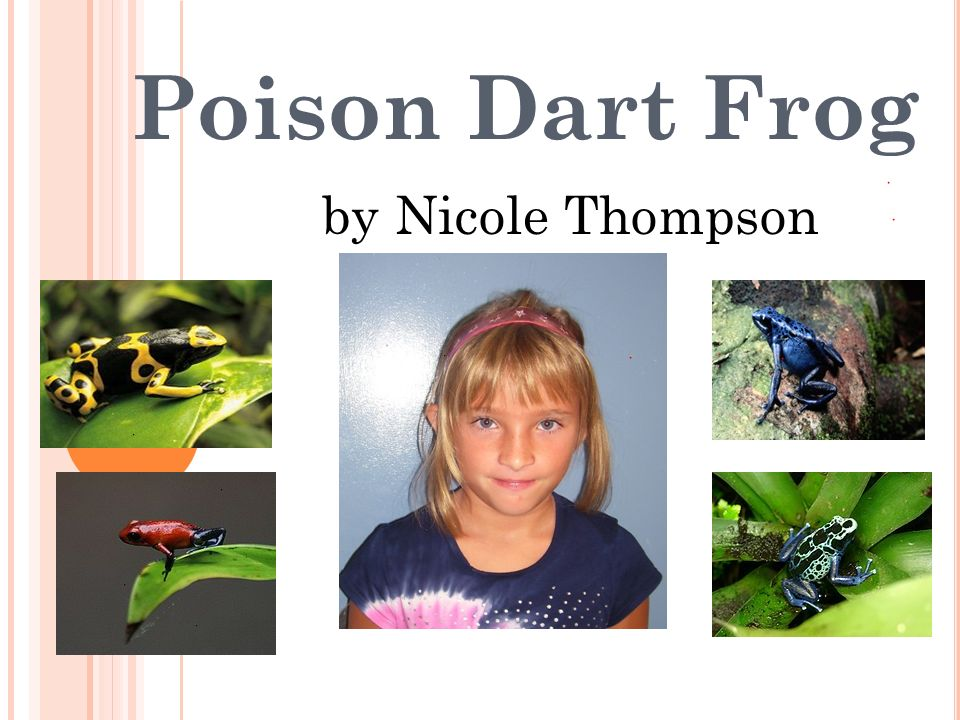 Poison Dart Frog by Nicole Thompson