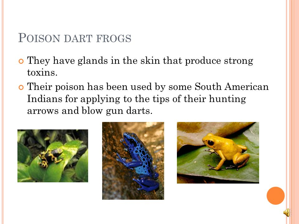 Poison dart frogs They have glands in the skin that produce strong toxins.