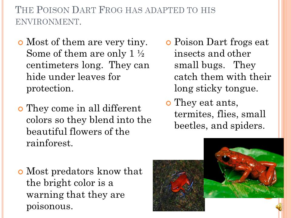 The Poison Dart Frog has adapted to his environment.
