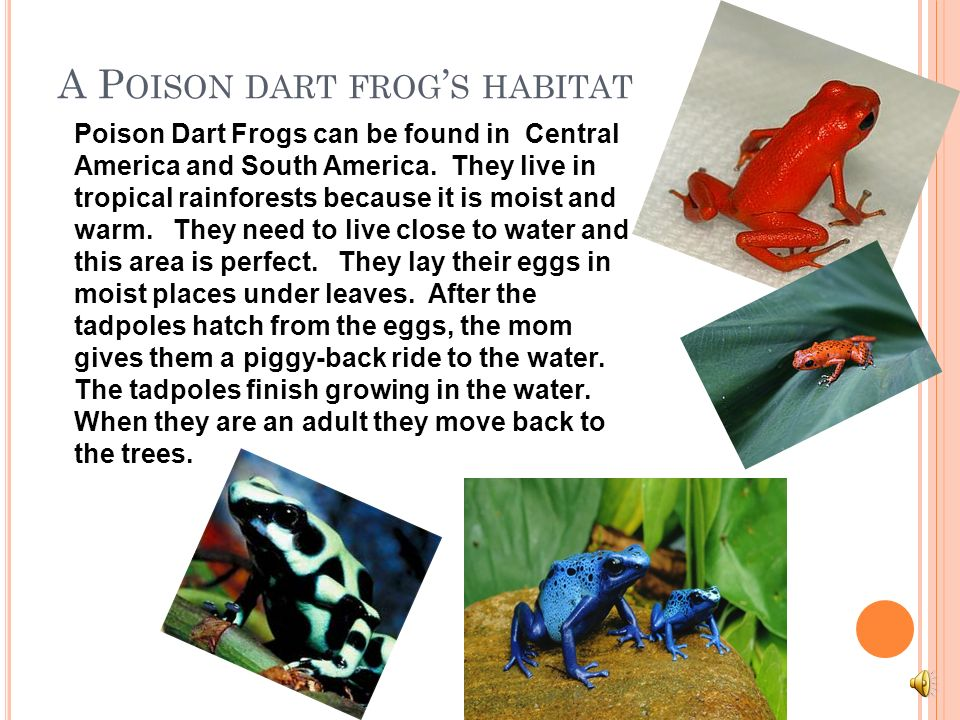 A Poison dart frog's habitat
