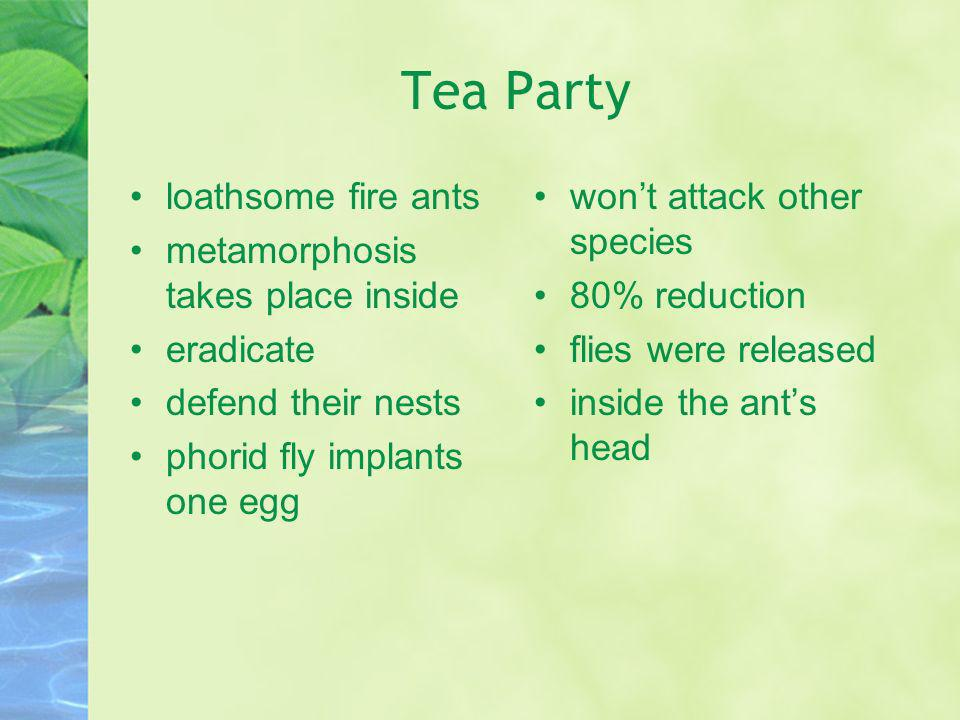 Tea Party loathsome fire ants metamorphosis takes place inside