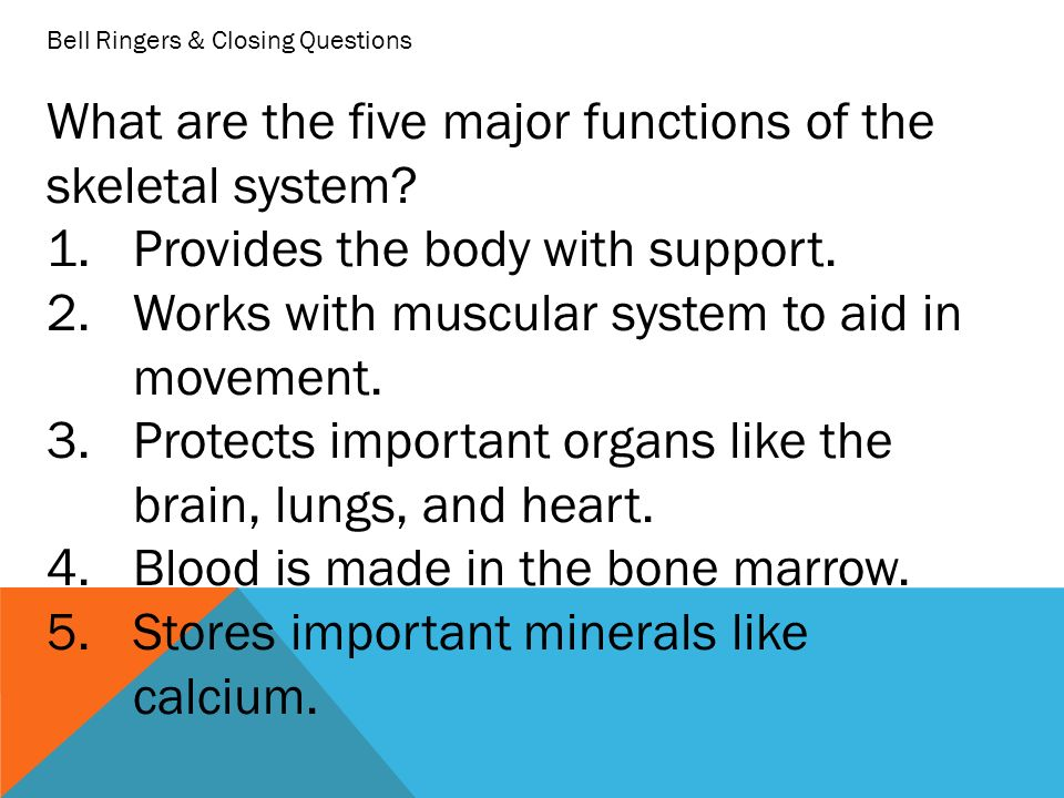 a look at the five major functions of a computer List the five major functions of the skeletal system a the six major functions performed by a computer operating system are: the processor management.