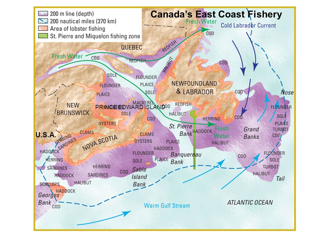 east coast canadian fisheries essay First contacts along the east coast sources source for  first contacts along the east coast sources newfoundland fisheries  essays in the ethnohistory of .