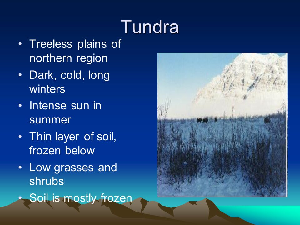 Tundra Treeless plains of northern region Dark, cold, long winters