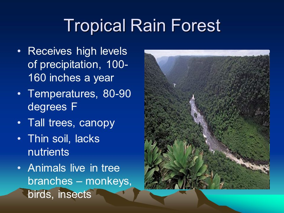 Tropical Rain Forest Receives high levels of precipitation, 100-160 inches a year. Temperatures, 80-90 degrees F.