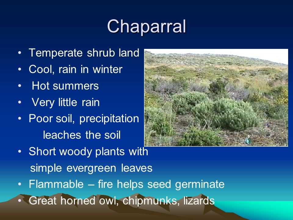 Chaparral Temperate shrub land Cool, rain in winter Hot summers