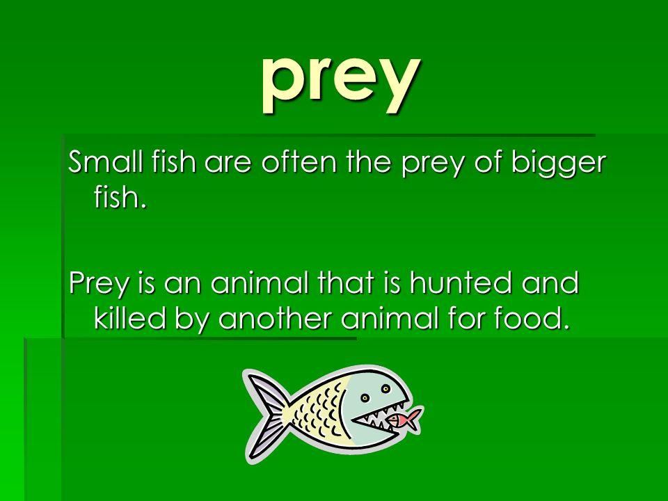 prey Small fish are often the prey of bigger fish.