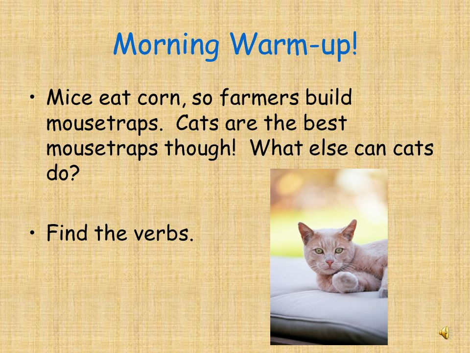 Morning Warm-up! Mice eat corn, so farmers build mousetraps. Cats are the best mousetraps though! What else can cats do