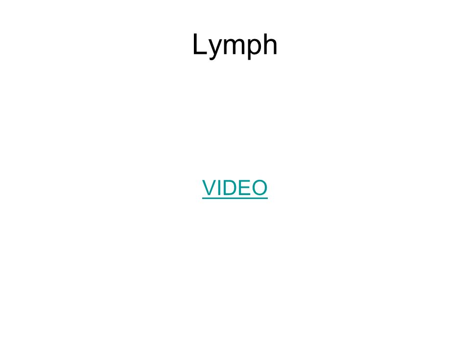 Lymph VIDEO