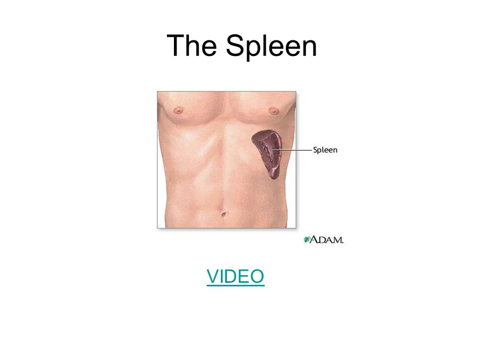 The Spleen VIDEO