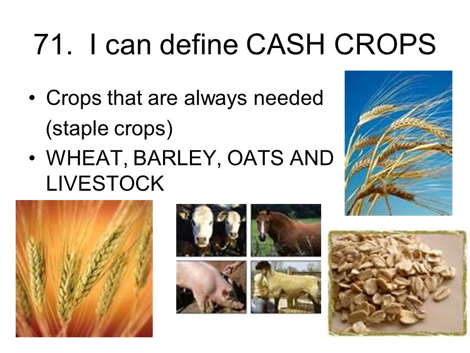 71. I can define CASH CROPS Crops that are always needed