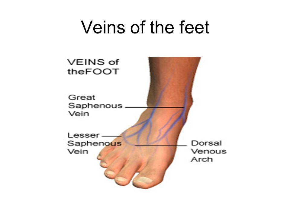 Contemporary Veins In Feet Pattern - Anatomy And Physiology Biology ...