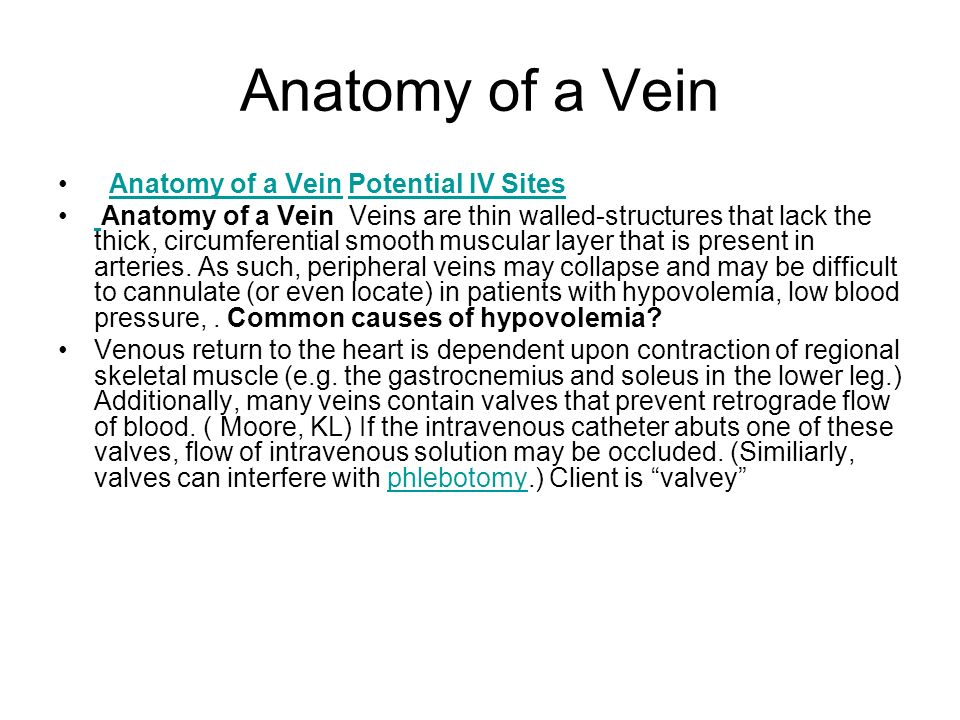 Anatomy of a Vein Anatomy of a Vein Potential IV Sites