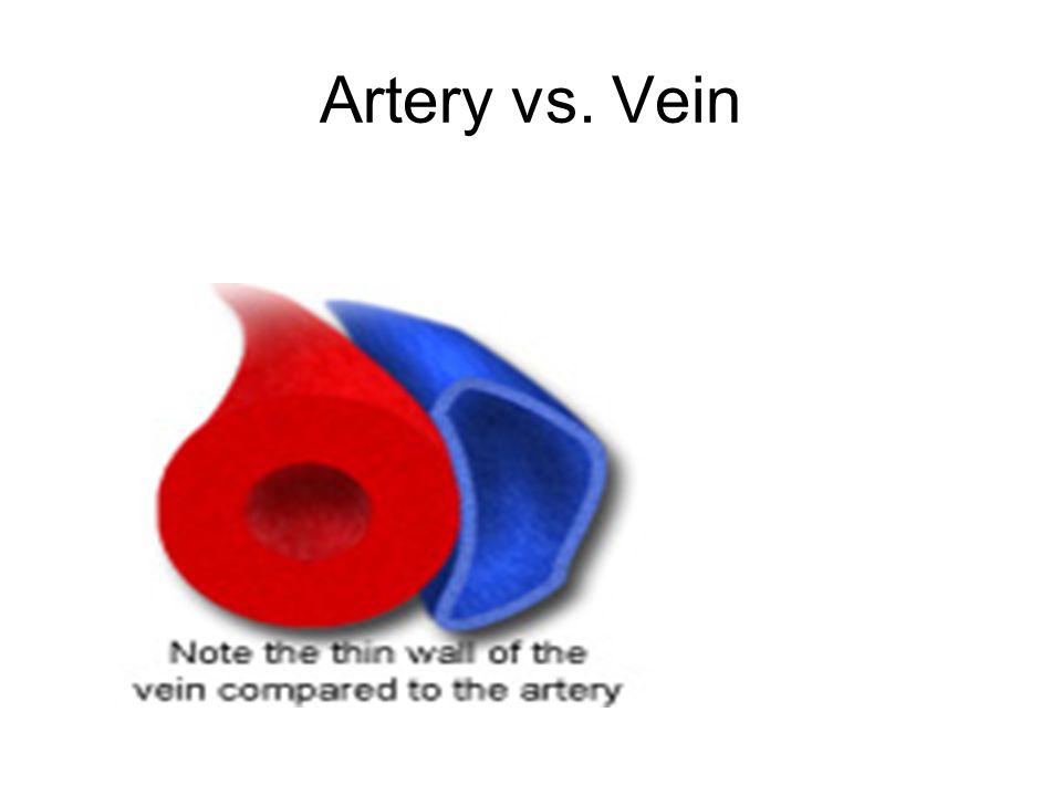 Artery vs. Vein