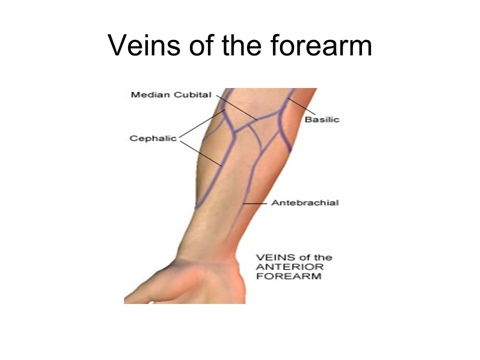 Veins of the forearm