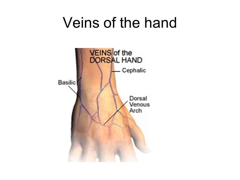 Veins of the hand