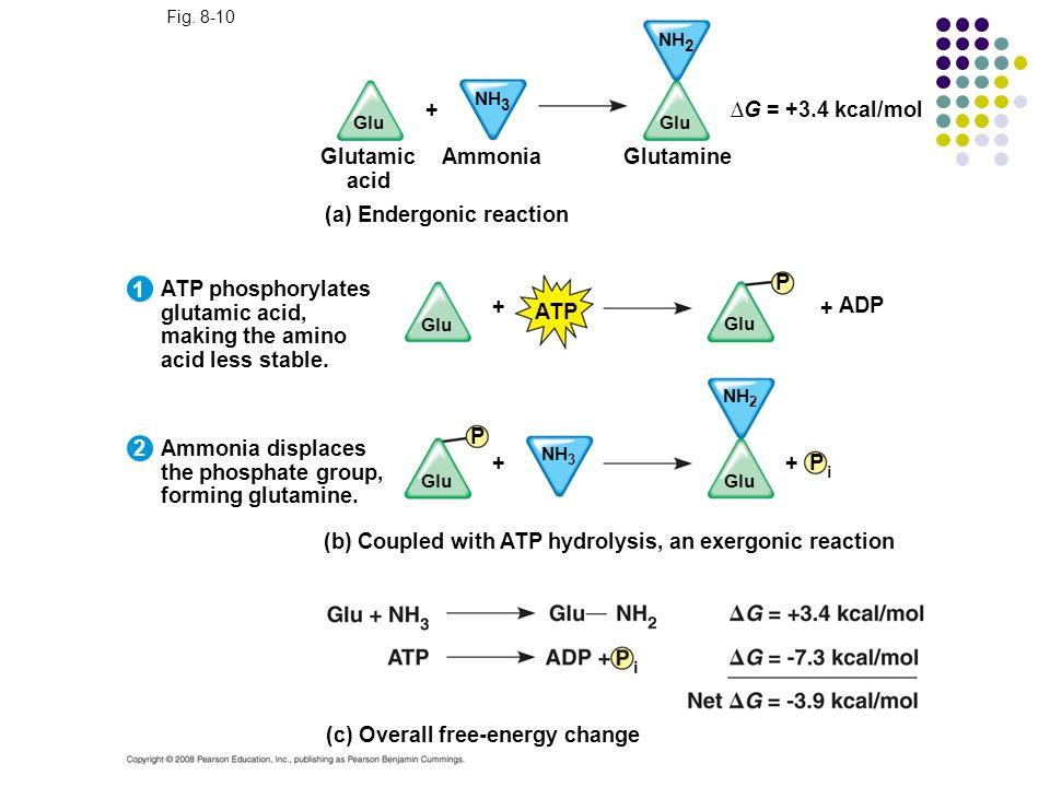 ∆G = +3.4 kcal/mol Glutamic acid Ammonia Glutamine