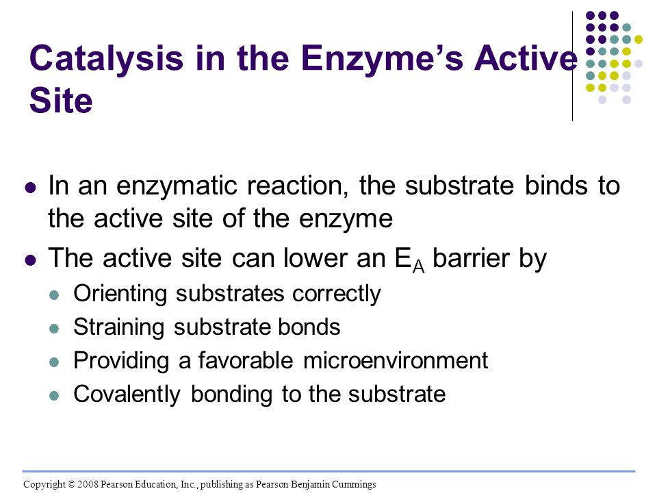 Catalysis in the Enzyme's Active Site