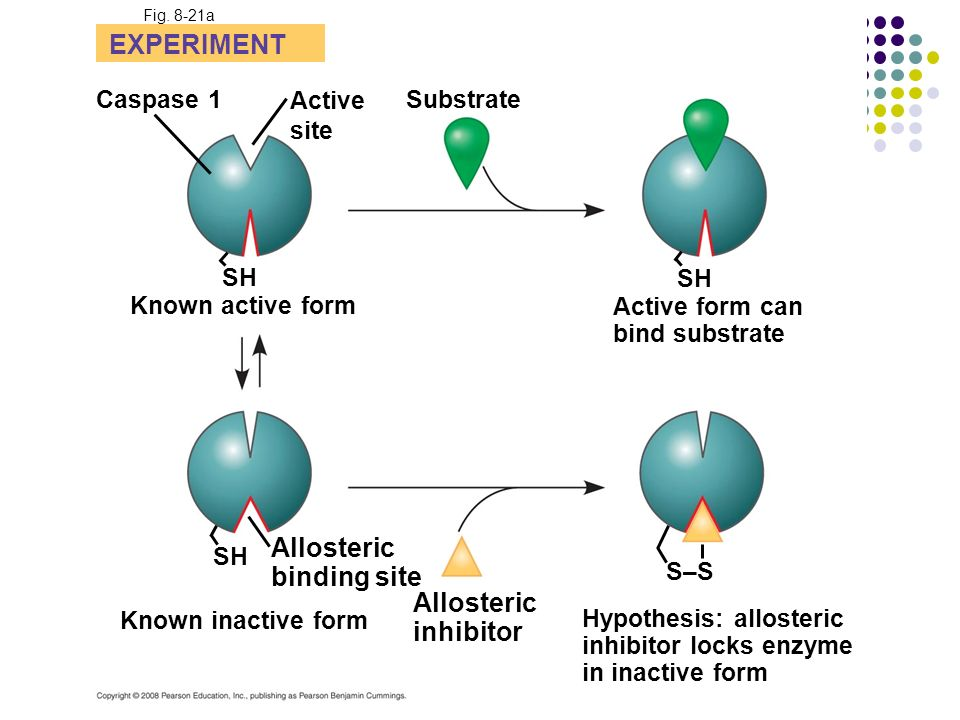 EXPERIMENT Allosteric binding site Allosteric inhibitor Caspase 1