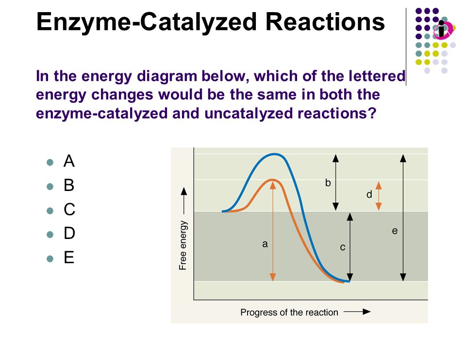 Enzyme-Catalyzed Reactions In the energy diagram below, which of the lettered energy changes would be the same in both the enzyme-catalyzed and uncatalyzed reactions