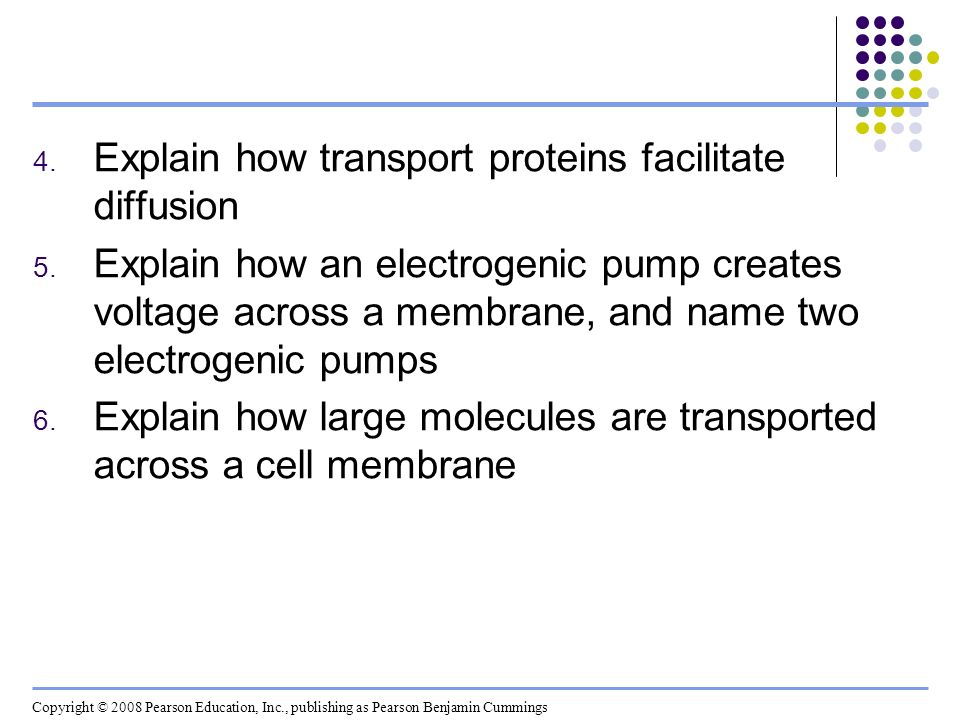 Explain how transport proteins facilitate diffusion
