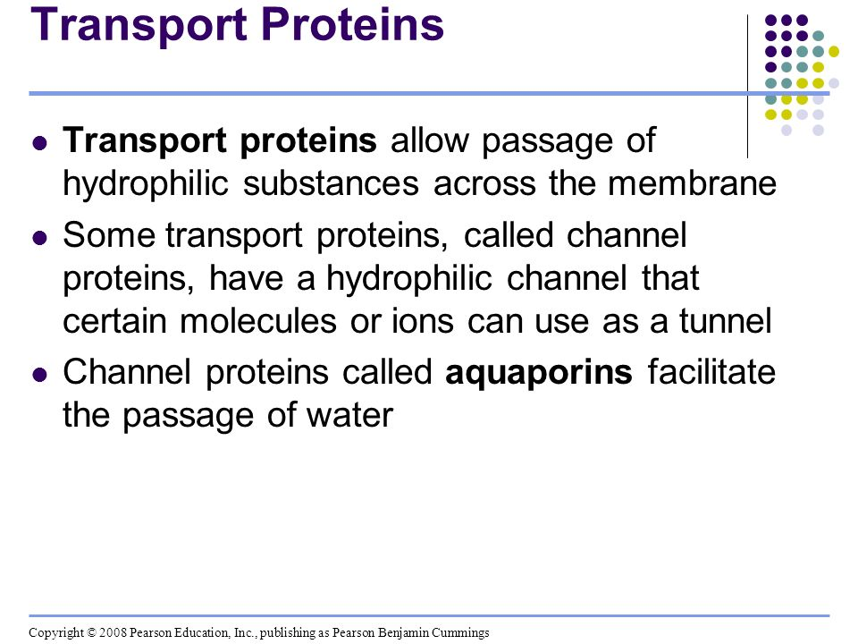 Transport Proteins Transport proteins allow passage of hydrophilic substances across the membrane.