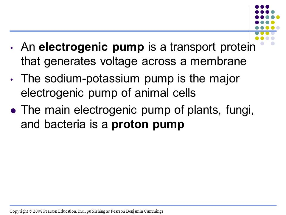 An electrogenic pump is a transport protein that generates voltage across a membrane