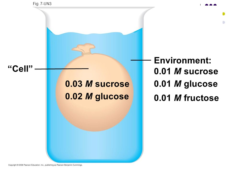 Environment: 0.01 M sucrose Cell 0.01 M glucose 0.01 M fructose