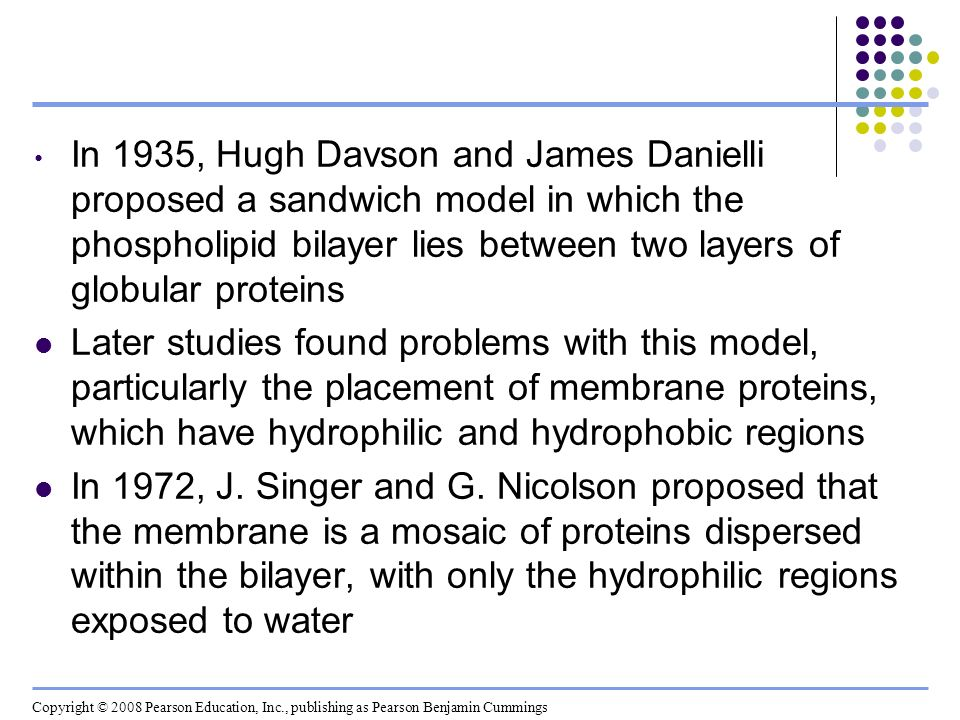 In 1935, Hugh Davson and James Danielli proposed a sandwich model in which the phospholipid bilayer lies between two layers of globular proteins