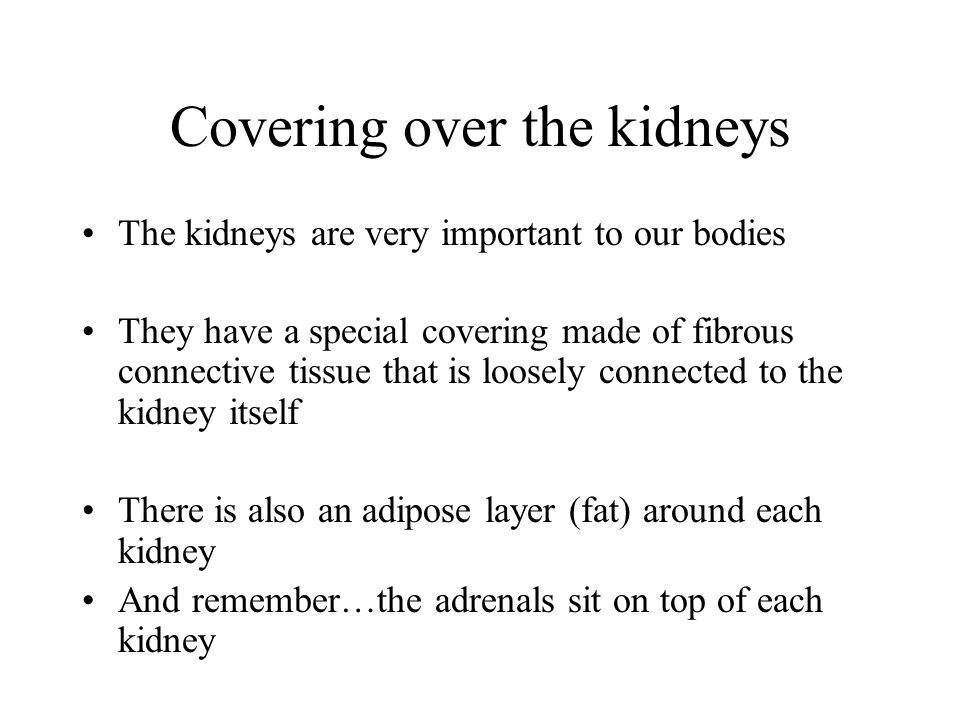 Covering over the kidneys