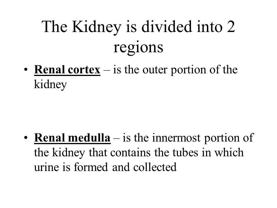 The Kidney is divided into 2 regions